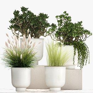 Houseplants in a white flowerpot for the interior 1019 3D model
