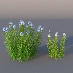 XfrogPlants Narrowleaf Bluestar - Amsonia Hubritchtii 3D model
