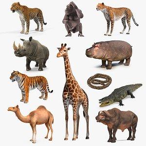 3D african animals 8 model