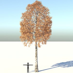 Aspen Tree 3D model