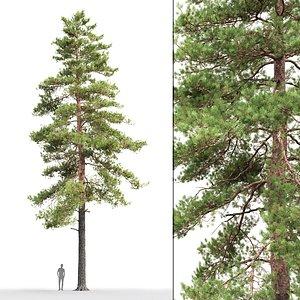 3D tree sylvestris 17