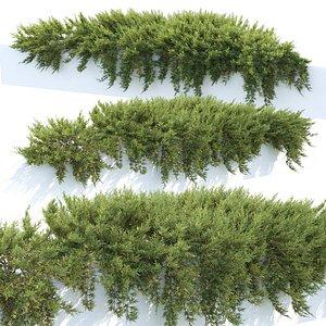 Juniperus creeping 02 3D model