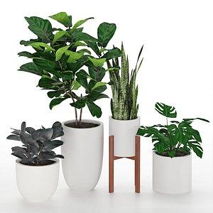 houseplant 53 3D model