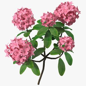 3D pink rhododendron flowers