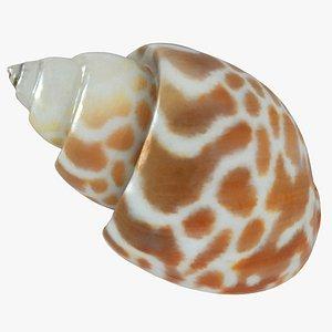 sea shell seashell 3D model