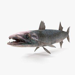 3d barracuda fish ray-finned