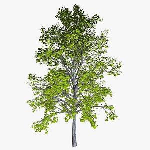 3D tree 24 preset materials model