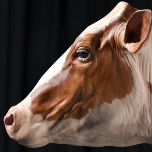 3D dairy cow