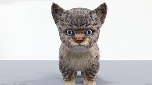 cute hair fur cat model