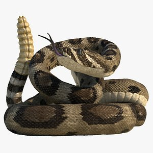 Rattlesnake Rigged Animated 3D