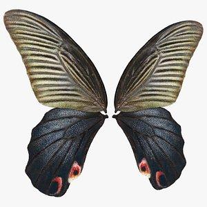 Papilio Protenor Wings Female model