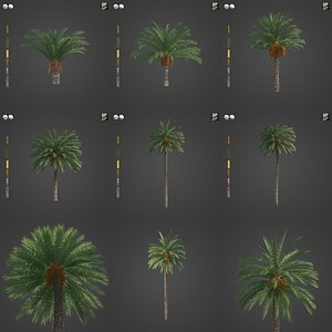 3D 2021 PBR Canary Date Palm Collection - Phoenix Canariensis