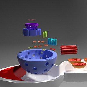 Sperm cell for 3D PRINTING 3D model