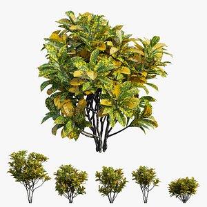 Croton plant set 12 3D model