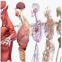 Realistic Complete Human Male Anatomy