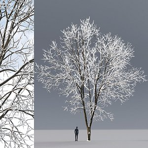 tree ash winter 3D model