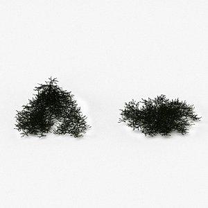 Juniperus conferta Blue Pacific 3D