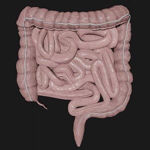 intestine science organ 3D