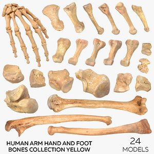3D Human Arm Hand and Foot Bones Collection Yellow - 24 models model