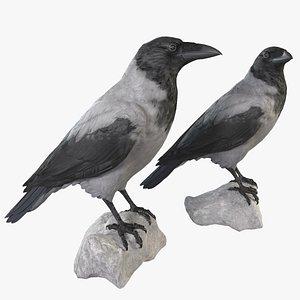 3D Crow