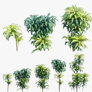 Dracaena Corn Plant model