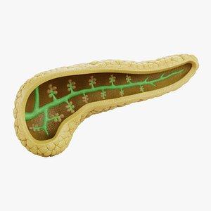 3D Pancreas Section