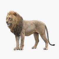 Lion RIGGED