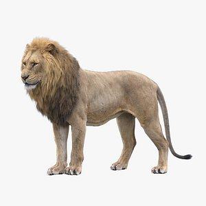 3D Lion RIGGED model