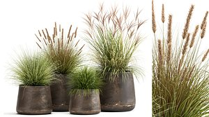 Reeds in a rusty Flowerpot for the interior 988 3D model
