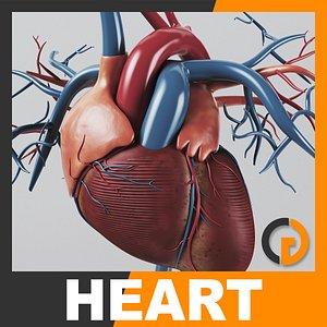 human heart - internal anatomy 3d model