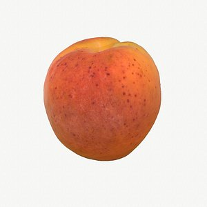 06 hy apricot fruit 3D model