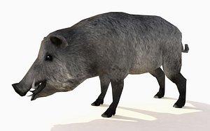 wild boar animations 3D model