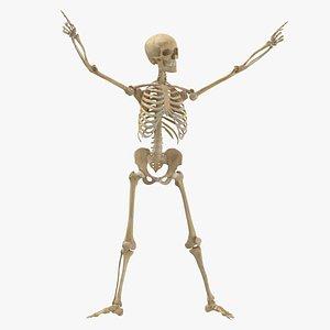 Human Female Skeleton Pose 78(1) 3D model