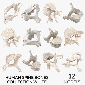 Human Spine Bones Collection White - 12 models model