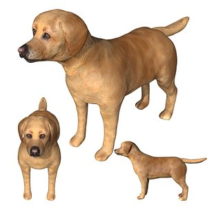3D Fully Rigged low poly Labrador Dog