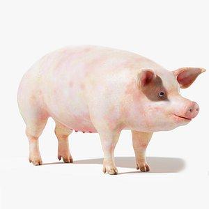 3D Pig Body Static model