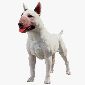 3D model bull terrier dog