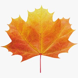 Maple Leaf V1 3D
