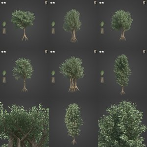 3D 2021 PBR Wild Peach Collection - Kiggelaria Africana
