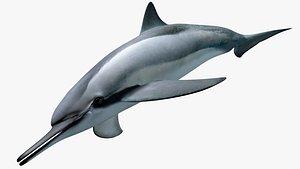 3D model Spinner Dolphin
