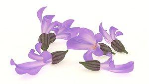 3D plant lavender flower spices