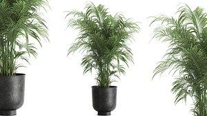 plants interior 3D