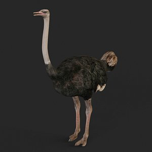 3D realistic ostrich model