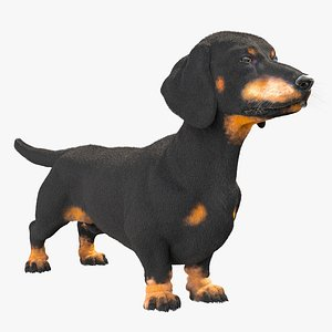 dachshund dog 3D model