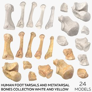 3D Human Foot Tarsals and Metatarsal Bones Collection White and Yellow  -  24 models