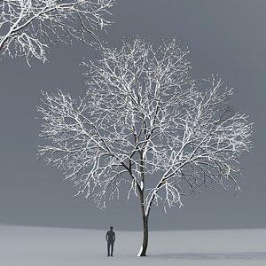 3D model ash tree
