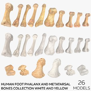 3D Human Foot Phalanx and Metatarsal Bones  Collection White and Yellow - 26 models