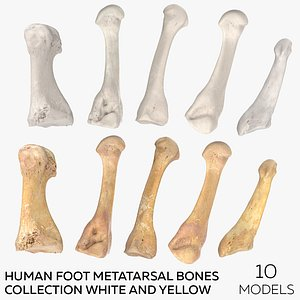 Human Foot Metatarsal Bones Collection White and Yellow - 10 models 3D