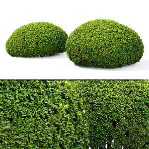 bush shrub hedge 3D