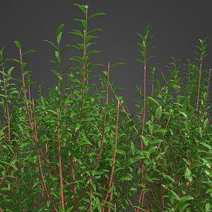 3D 2021 PBR Purple Willow Collection - Salix Purpurea
